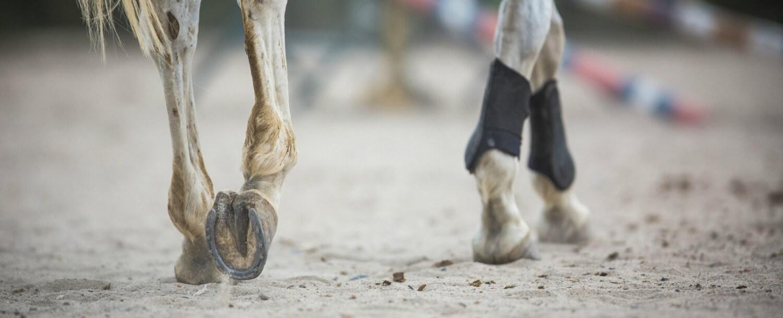 tryon-international-equestrian-center-show-schedule