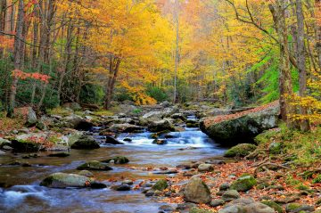 A river in North Carolina: North Carolina's fall colors: things to do in nearby cities during your stay at The Esmeralda Inn & Restuarant.